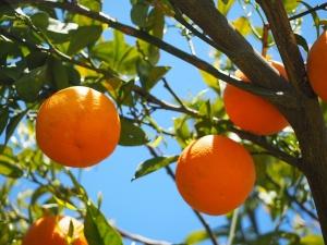 oranges-1117631_1280
